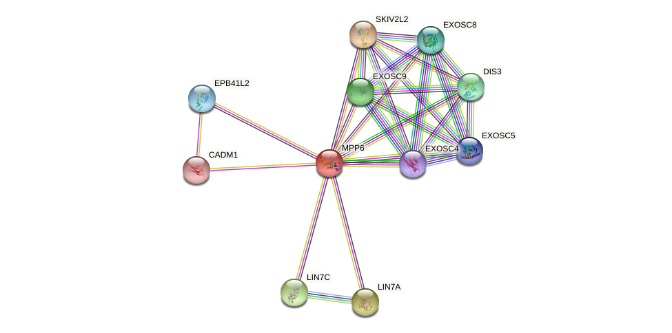 MPP6 protein (human) - STRING interaction network