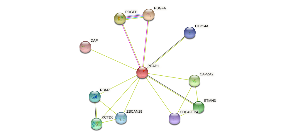 PDAP1 protein (human) - STRING interaction network