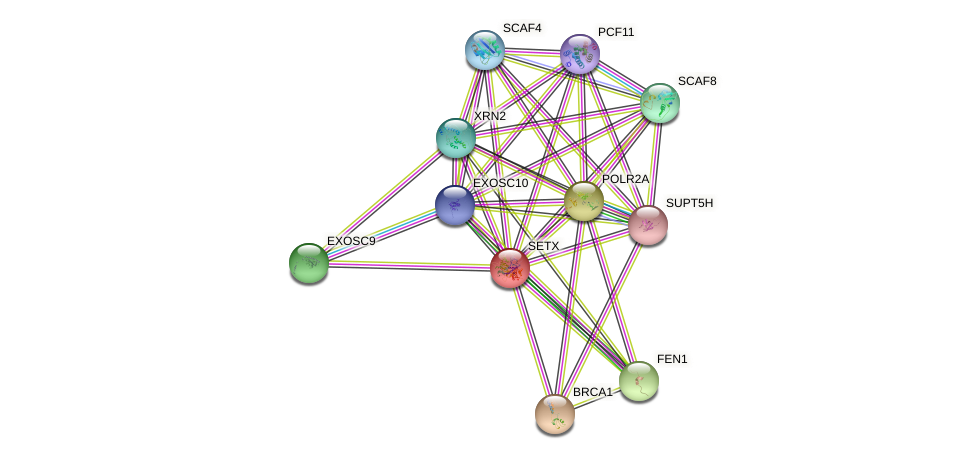 SETX protein (human) - STRING interaction network