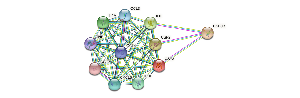 CSF3 protein (human) - STRING interaction network