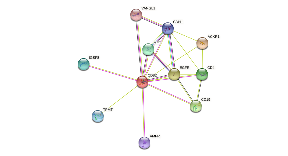 CD82 protein (human) - STRING interaction network