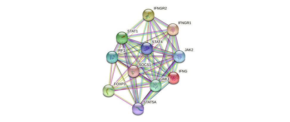 IFNG protein (human) - STRING interaction network