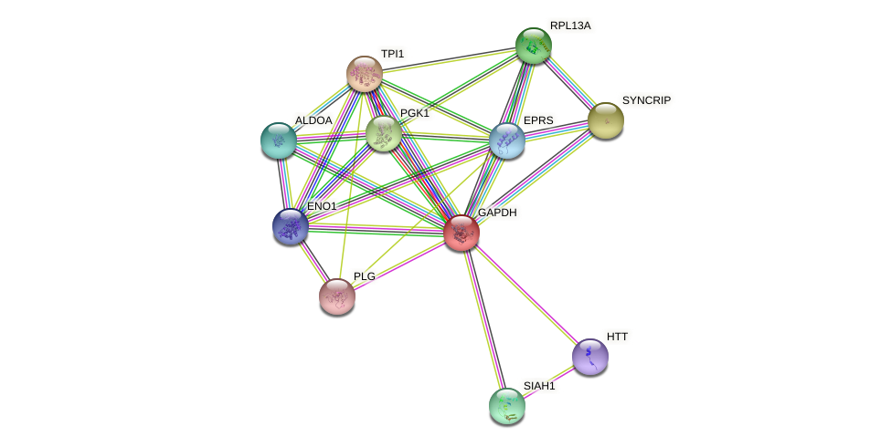GAPDH protein (human) - STRING interaction network
