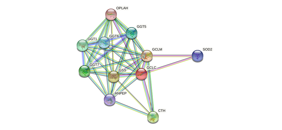 GCLC protein (human) - STRING interaction network