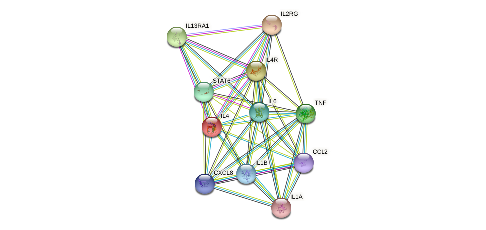 IL4 protein (human) - STRING interaction network