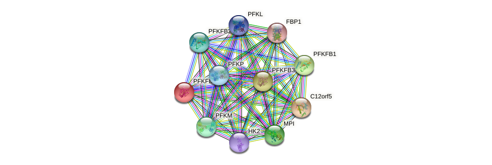 PFKFB4 protein (human) - STRING interaction network