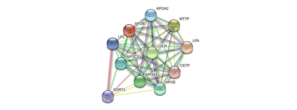 APOB protein (human) - STRING interaction network