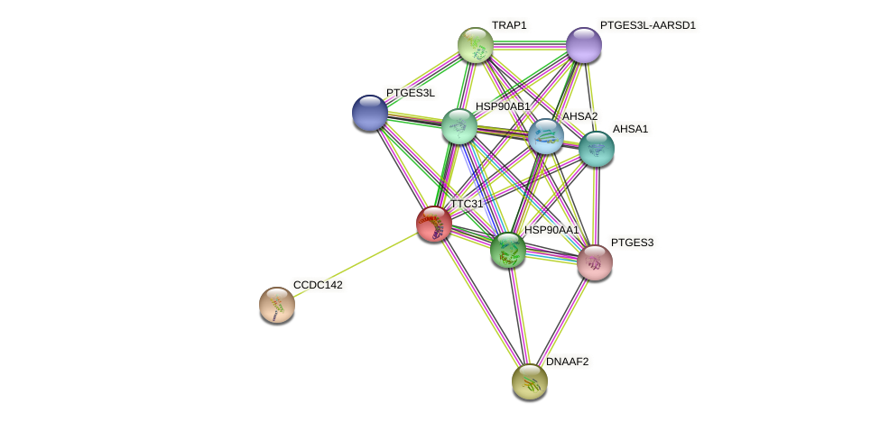 TTC31 protein (human) - STRING interaction network