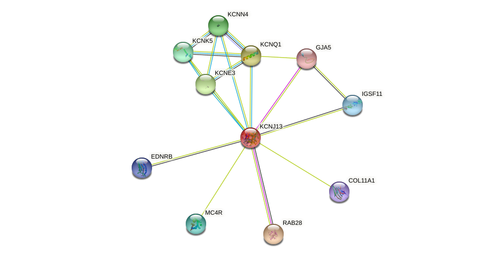 KCNJ13 protein (human) - STRING interaction network