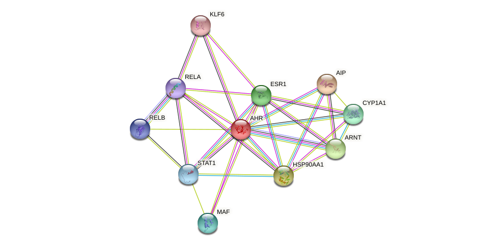 AHR protein (human) - STRING interaction network