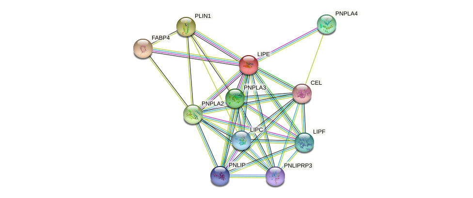 LIPE protein (human) - STRING interaction network