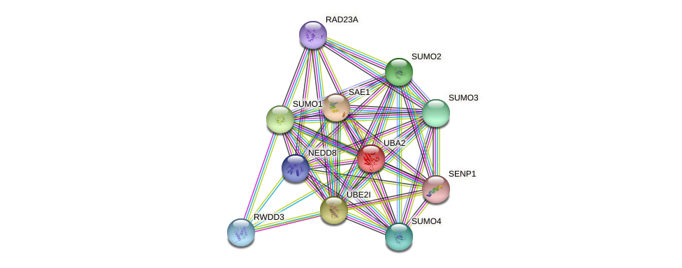 UBA2 protein (human) - STRING interaction network