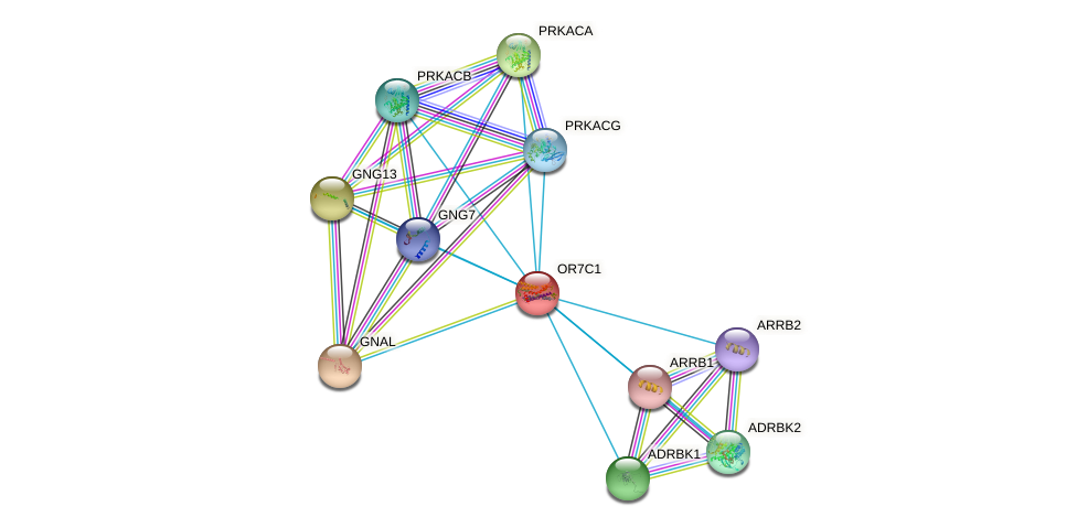 OR7C1 protein (human) - STRING interaction network