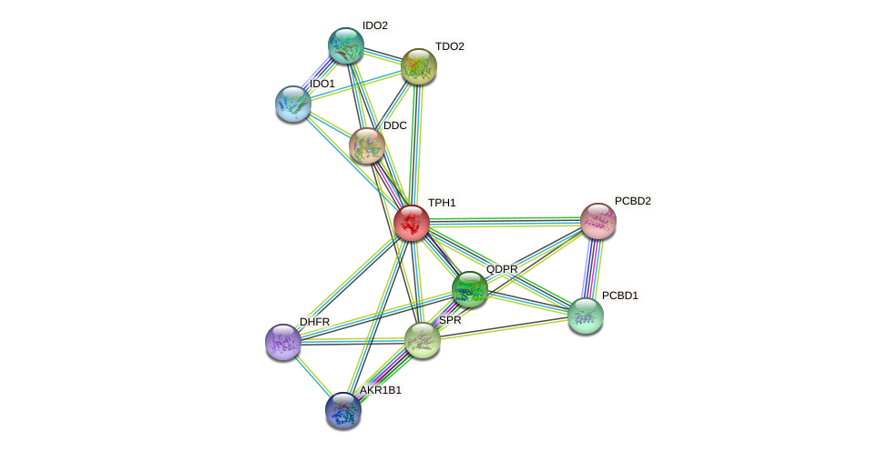TPH1 protein (human) - STRING interaction network