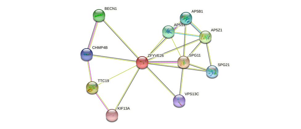 ZFYVE26 protein (human) - STRING interaction network