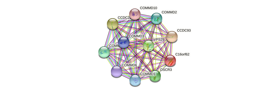 C16orf62 protein (human) - STRING interaction network