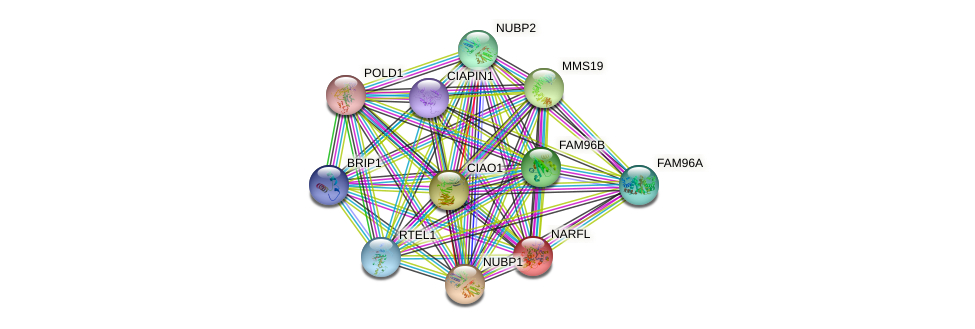 NARFL protein (human) - STRING interaction network