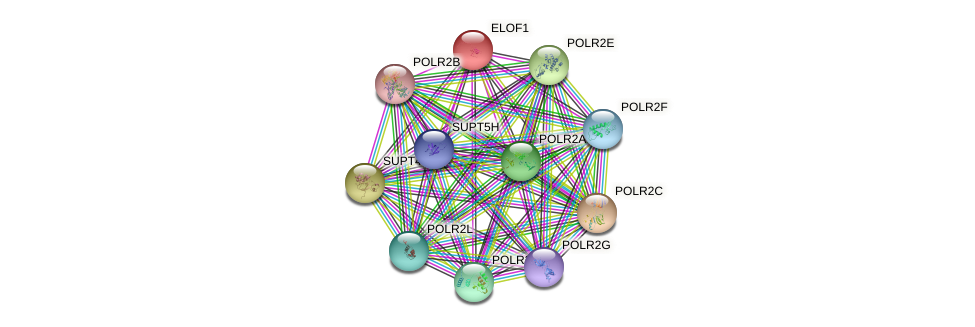ELOF1 protein (human) - STRING interaction network