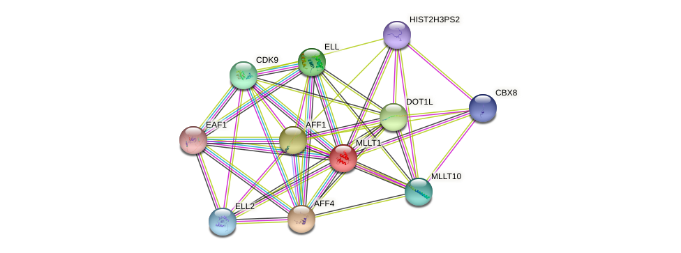 MLLT1 protein (human) - STRING interaction network