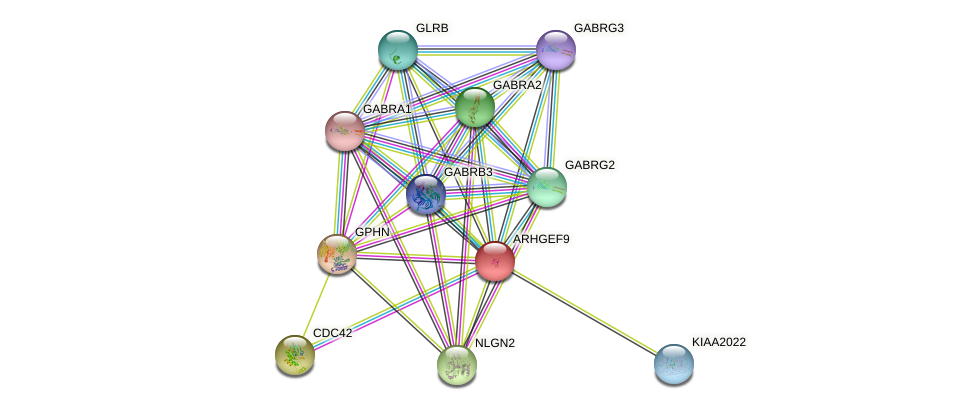 ARHGEF9 protein (human) - STRING interaction network