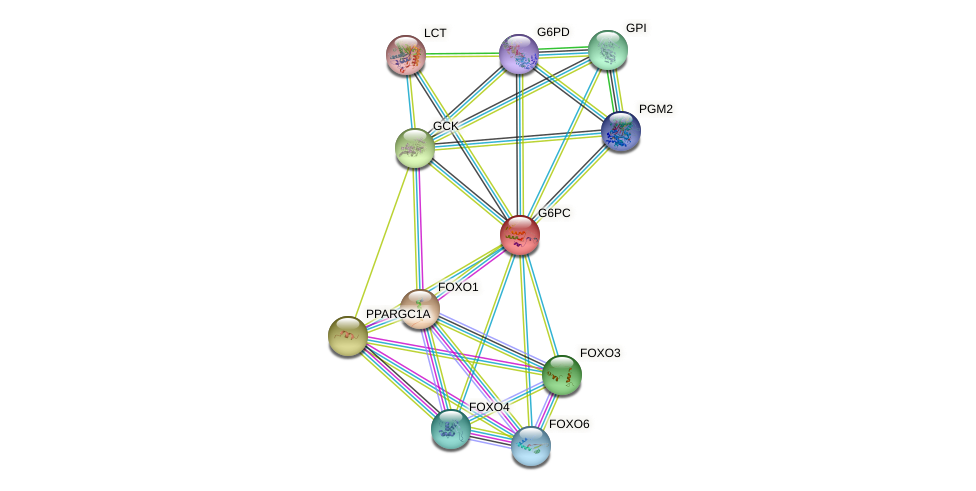 G6PC protein (human) - STRING interaction network