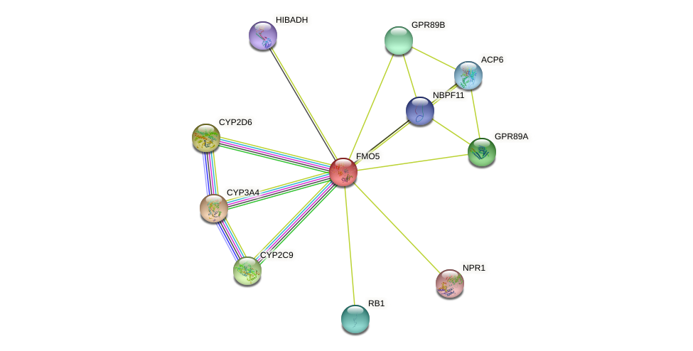 FMO5 protein (human) - STRING interaction network