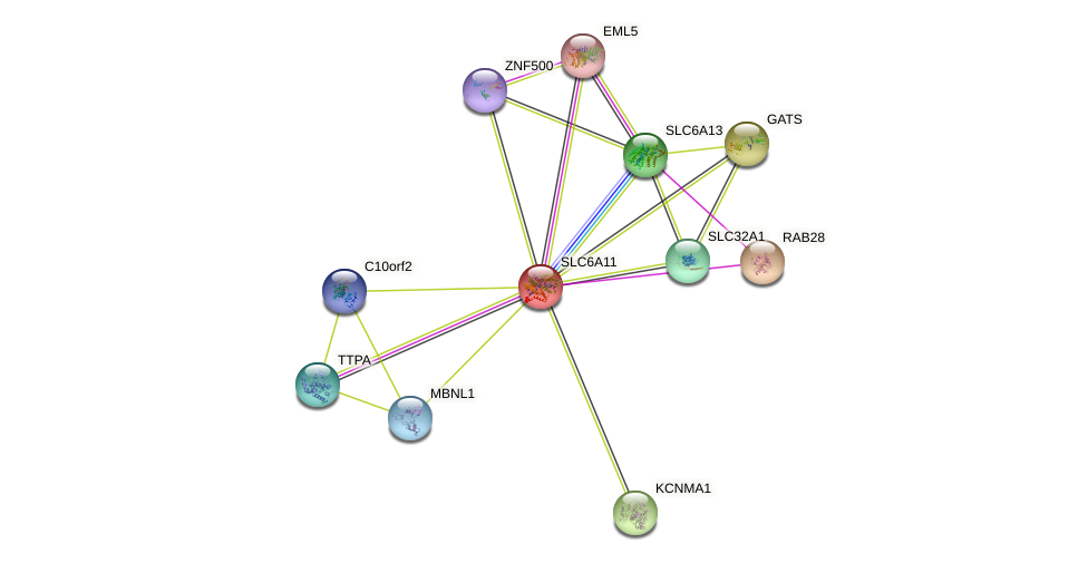 SLC6A11 protein (human) - STRING interaction network