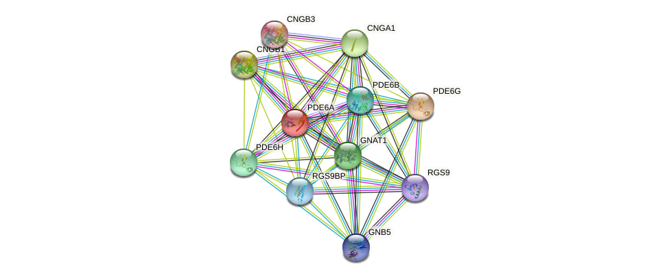 PDE6A protein (human) - STRING interaction network