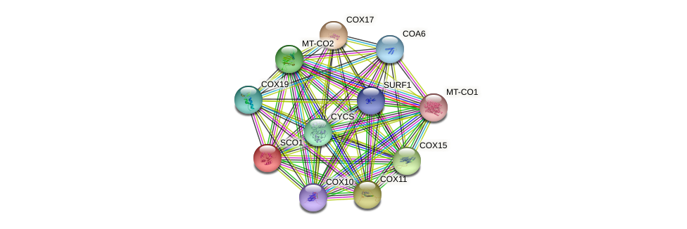 SCO1 protein (human) - STRING interaction network