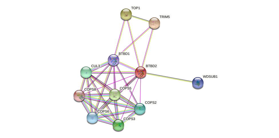 BTBD2 protein (human) - STRING interaction network