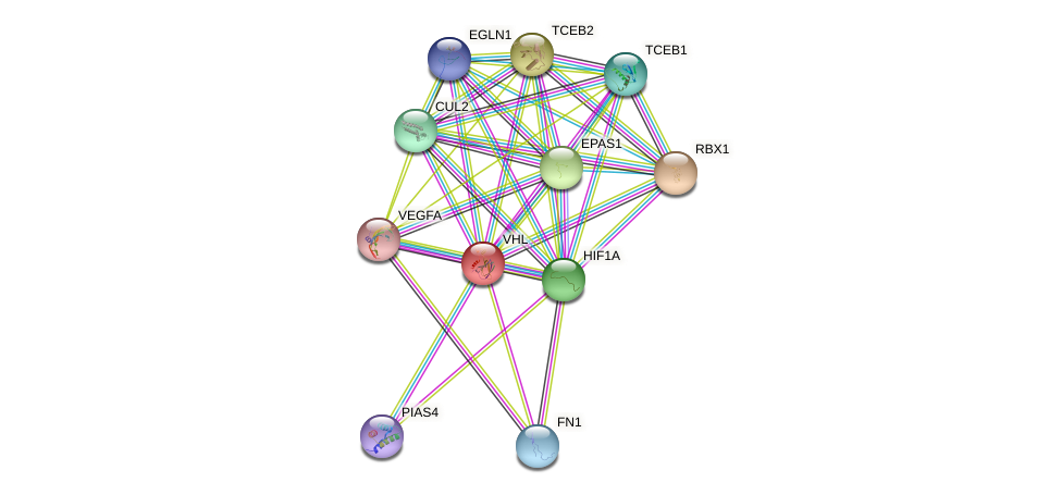 VHL protein (human) - STRING interaction network