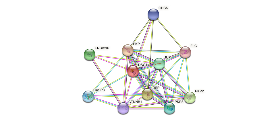 DSG1 protein (human) - STRING interaction network