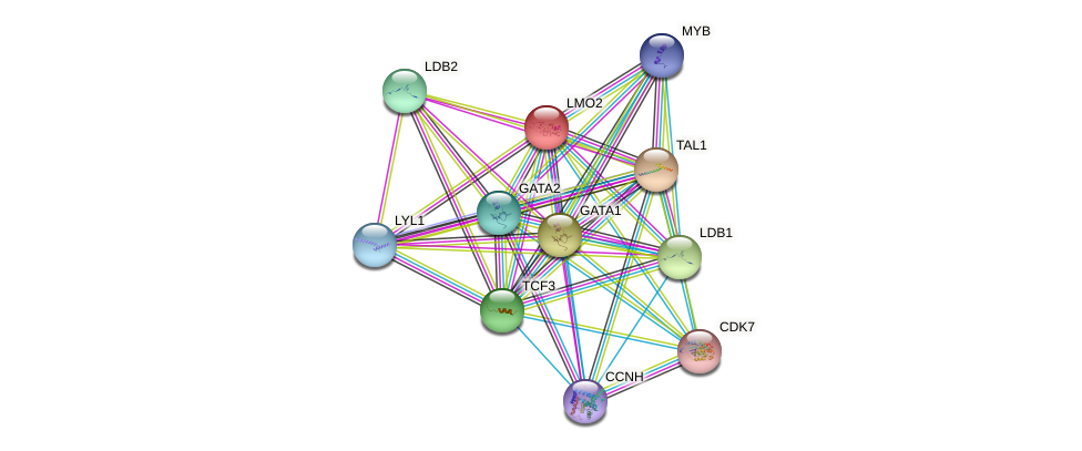 LMO2 protein (human) - STRING interaction network