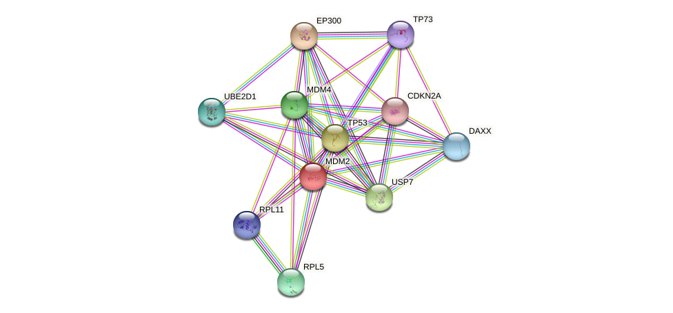 MDM2 protein (human) - STRING interaction network