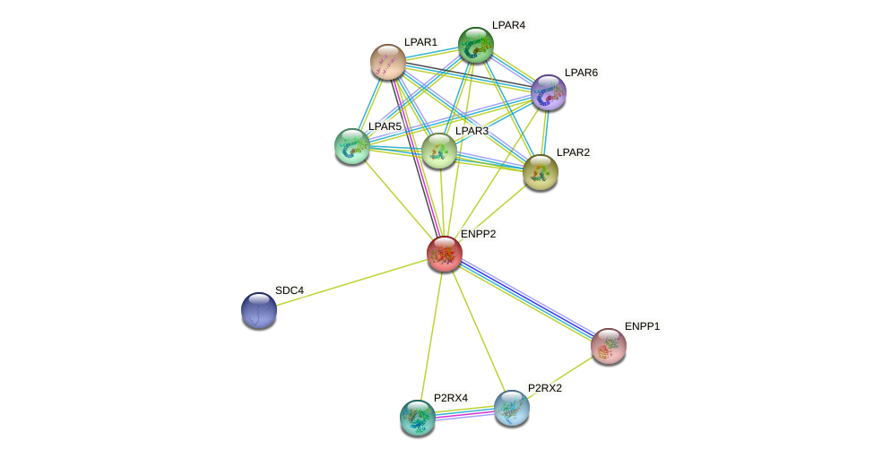 ENPP2 protein (human) - STRING interaction network