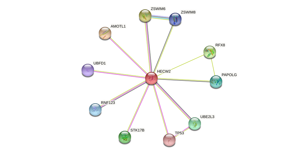 HECW2 protein (human) - STRING interaction network