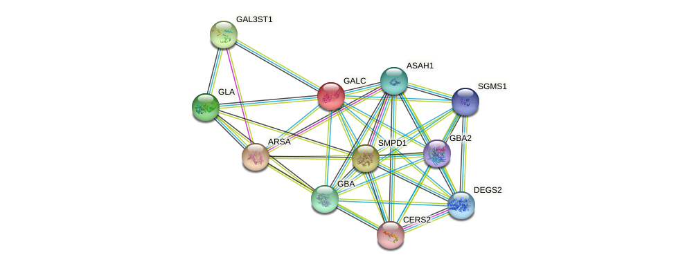 GALC protein (human) - STRING interaction network