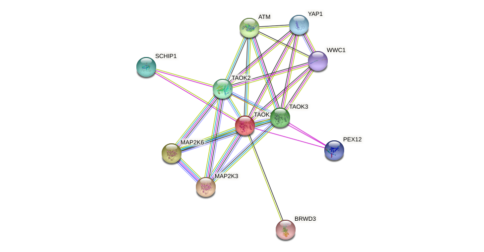 TAOK1 protein (human) - STRING interaction network