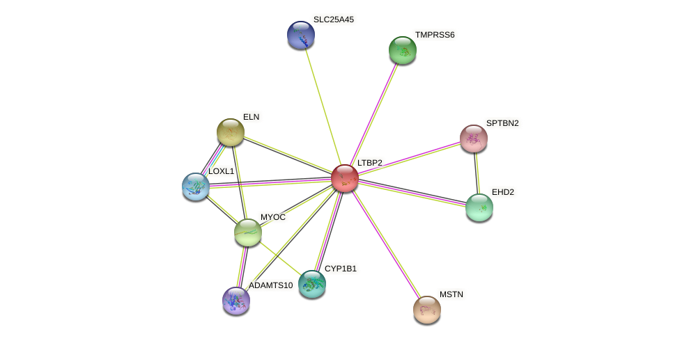LTBP2 protein (human) - STRING interaction network