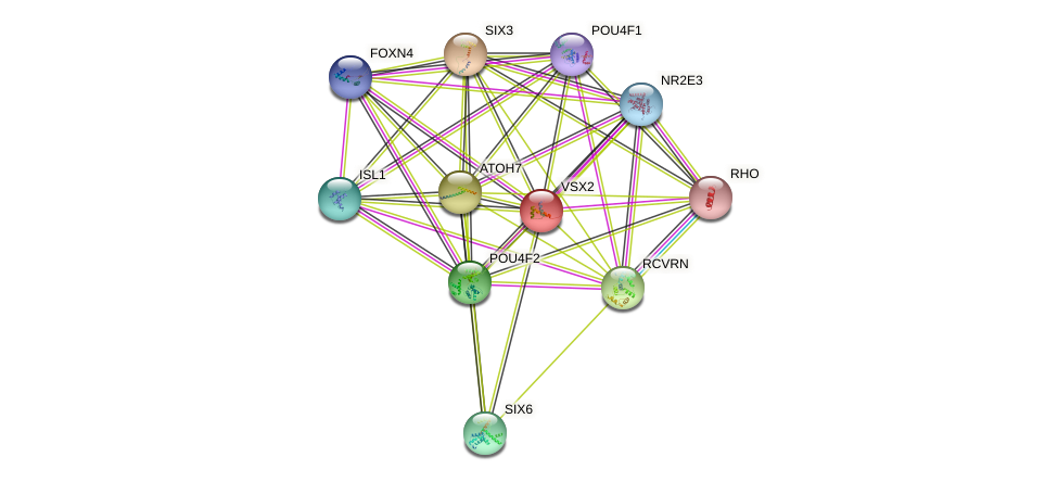 VSX2 protein (human) - STRING interaction network