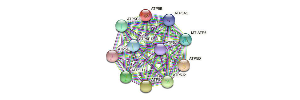 ATP5B protein (human) - STRING interaction network