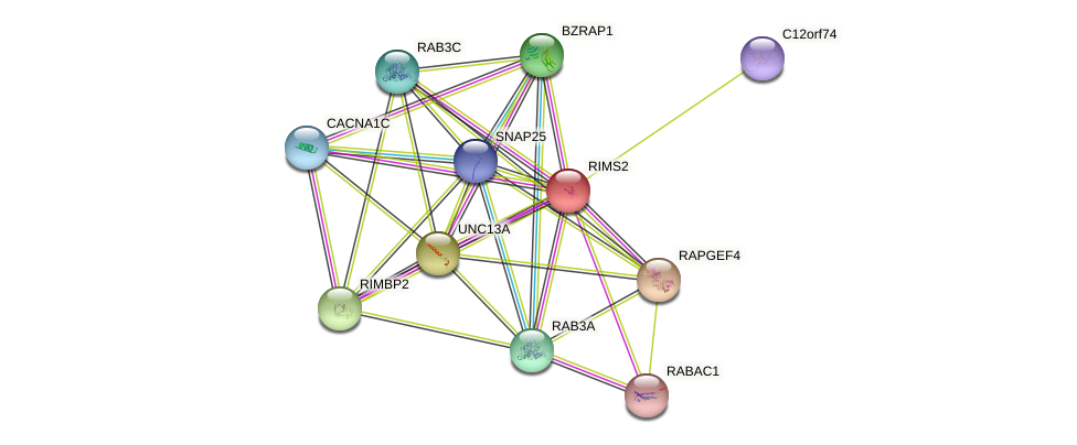 RIMS2 protein (human) - STRING interaction network