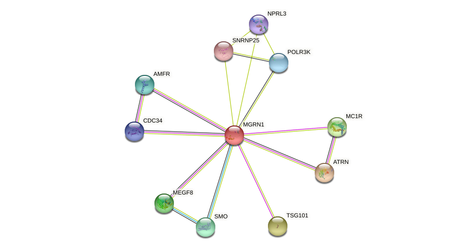 MGRN1 protein (human) - STRING interaction network