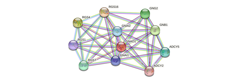 GNAO1 protein (human) - STRING interaction network