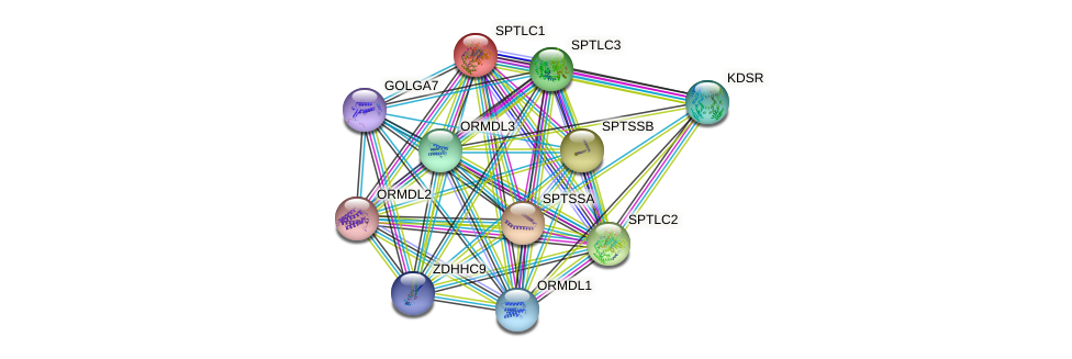 SPTLC1 protein (human) - STRING interaction network