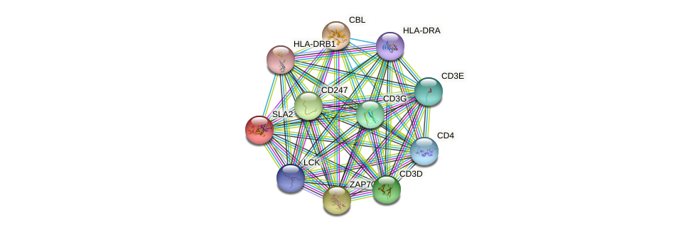 SLA2 protein (human) - STRING interaction network