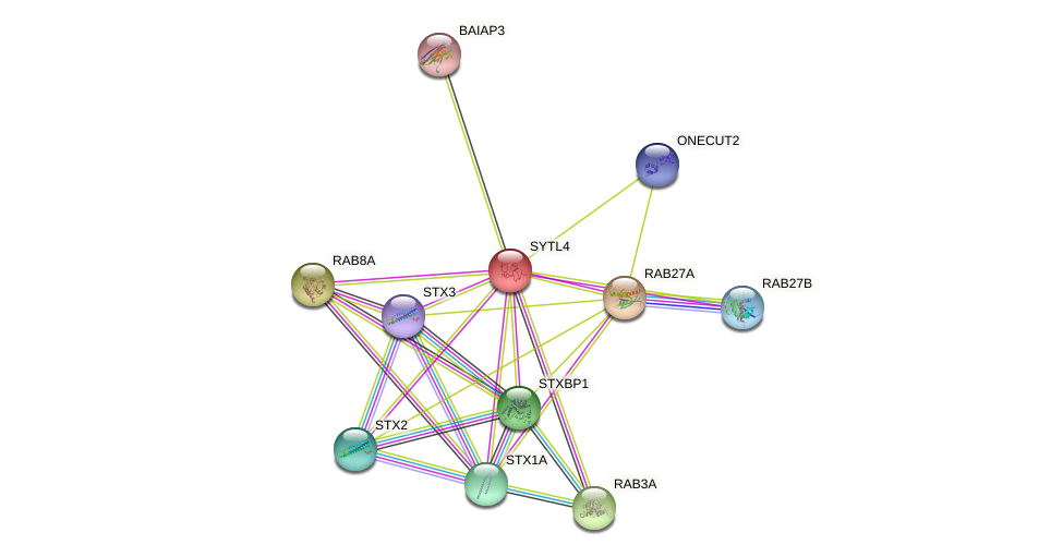 SYTL4 protein (human) - STRING interaction network