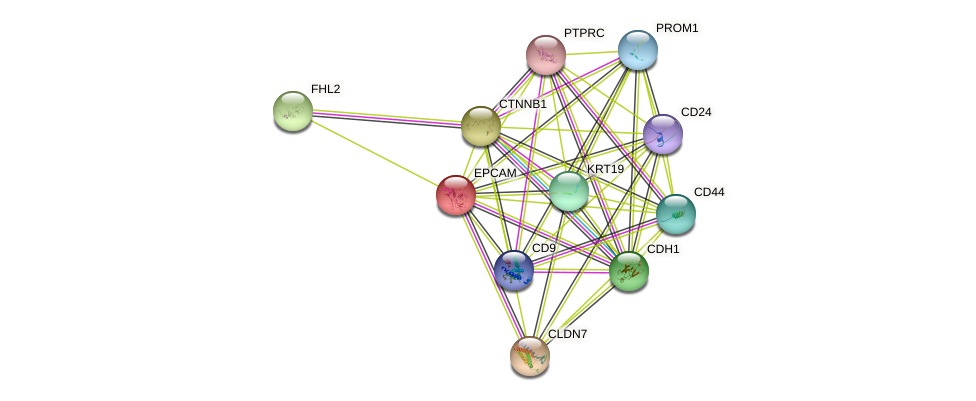 EPCAM protein (human) - STRING interaction network