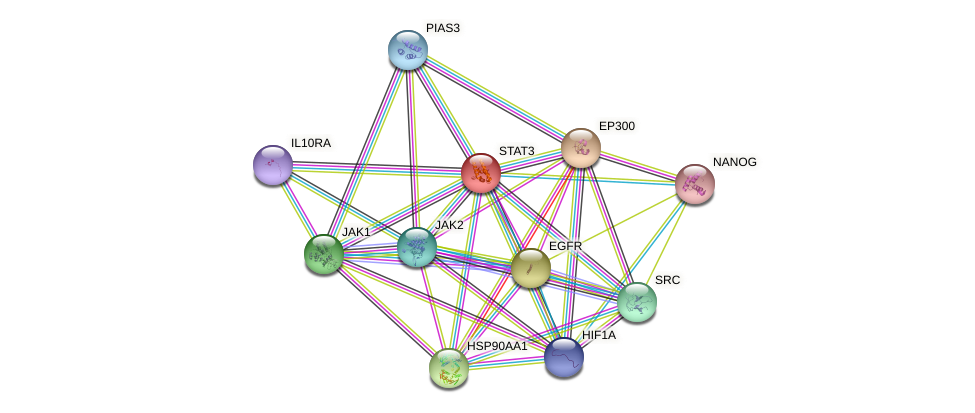 STAT3 protein (human) - STRING interaction network