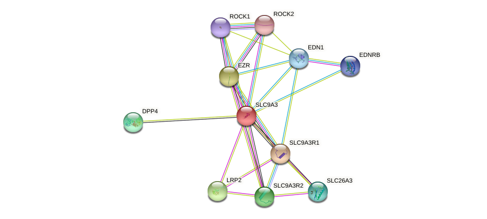 SLC9A3 protein (human) - STRING interaction network